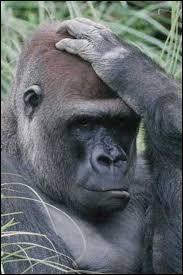 """Qui nous parle d'un """"gorille"""" dans un de ses titres ?"""