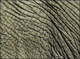 C'est un papier marbré, utilisé pour le pliage, qui porte le nom d'un pachyderme.