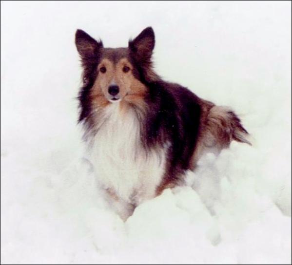 Lassie est