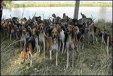 On l'entend au moment du découplage des chiens de chasse : laisser -----.