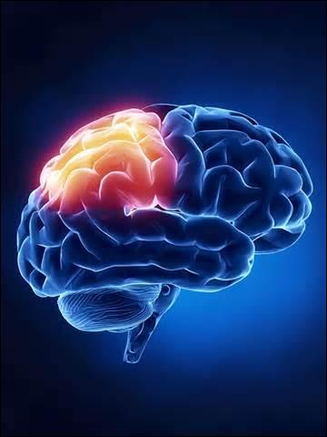 C'est l'organe principal du système nerveux. Il est divisé en deux parties et baigne dans un liquide céphalo-rachidien pour amortir certains chocs violents. De quel organe s'agit-il ?