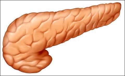 Devinez quel est cet organe grâce à la photo ci-contre.