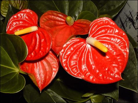 Quelle est cette plante ? Quel est son nom botanique ? (2 réponses attendues)