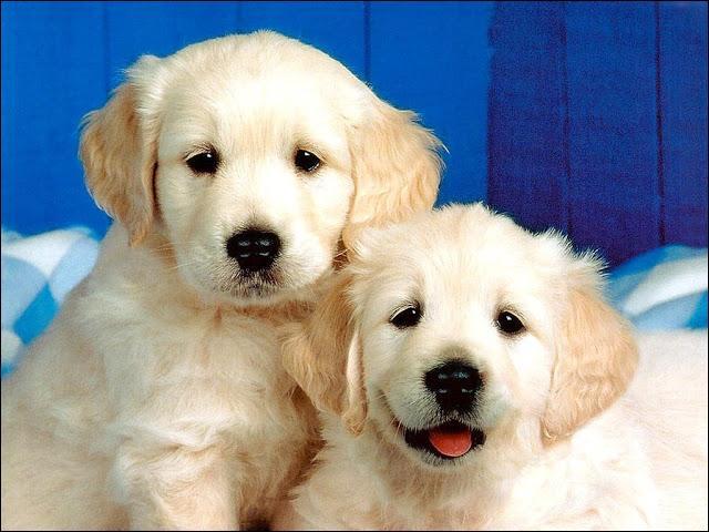 """Trouvez la traduction anglaise du mot """"chien"""" :"""