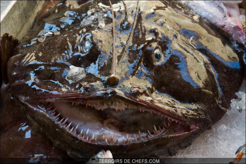 """Sur les étals des poissonniers, ils la désignent """"lotte"""" sans montrer sa tête. Bizarre, ça m'aurait étonné..."""