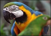 Quel terme ne désigne pas un perroquet ?