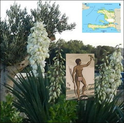 D'où vient le nom de cette plante fleurie au port majestueux, le --------- ?