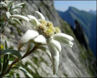 Quelle fleur est représentée sur cette photo ?