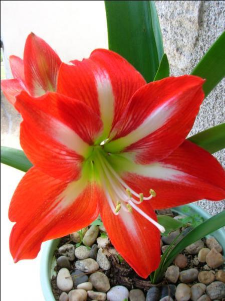 Que forment les sépales d'une fleur ?