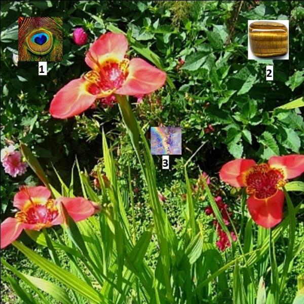 Cherchez bien les indices pour trouver le nom de cette belle fleur de la famille des ------.