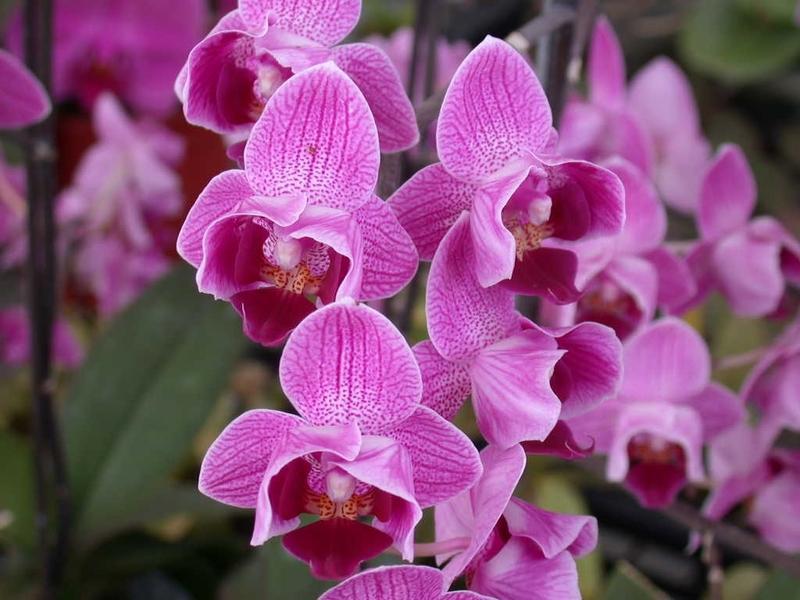 Des fleurs, de la gaieté
