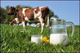 """Quelle personne traite-t-on parfois de """"vache à lait"""" ?"""