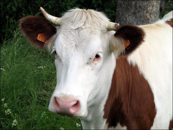 Les animaux de la ferme en espagnol