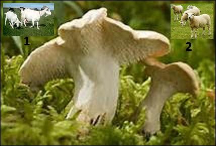 Quel animal donne le nom vernaculaire à ce champignon ?