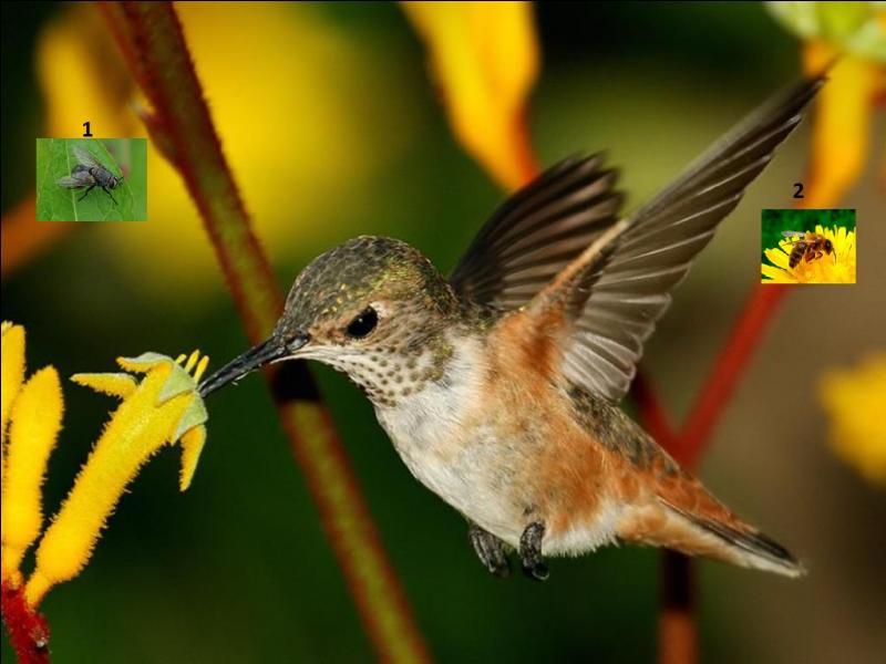 Quel insecte a donné son nom à ce joli petit oiseau ?