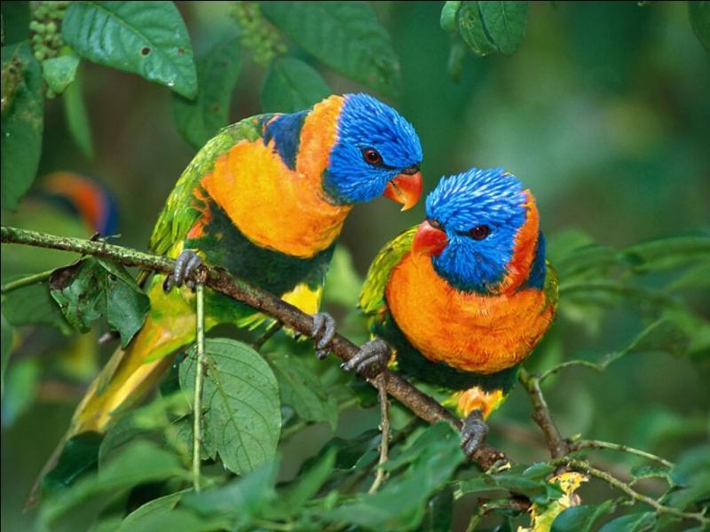 """""""Les oiseaux lancèrent leurs premiers trilles"""". Quel est le sens du mot """"trille"""" ?"""