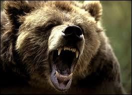 ''L'Étoile polaire se trouve à la queue du gros ours. Dans l'hémisphère sud, la ------------------------- qui permet de s'orienter est la Croix-Rouge.'' (Complétez)