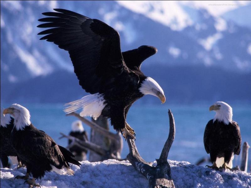 Quel est le plus grand oiseau du monde ?