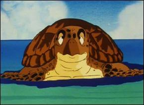 Quel est le véritable nom de cette tortue ?
