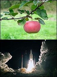Une fort jolie mine pour une pomme à la fois acide et sucrée. Quel est son nom ?