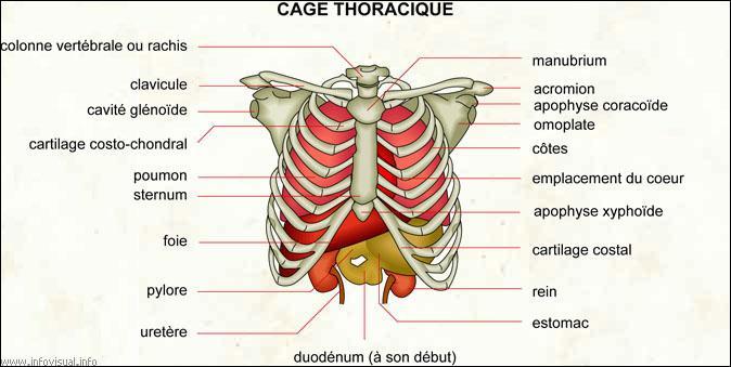 De fortes douleurs dans une gauche omoplate osteokhondroz