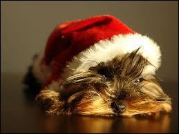 """Qui chante """"Joyeux Noël"""" ?"""