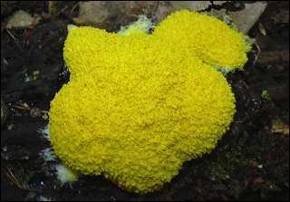 Comme c'est joli ! Est-ce bien un champignon ?