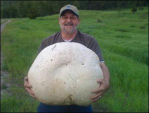 Ce monsieur porte un très gros champignon :