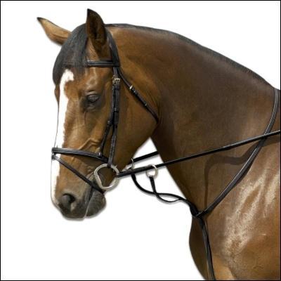 Comment s'appelle le morceau d'harnachement qui est autour de l'encolure du cheval?