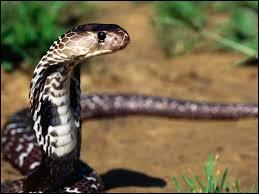 Quelle espèce ne concerne pas les serpents ?