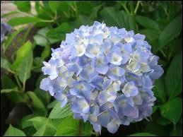 Pouvez-vous me donner le nom de cette fleur ?