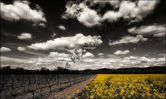 """A qui sont les magnifiques paroles ...""""quand le vent est au sud écoutez le chanter"""" :"""