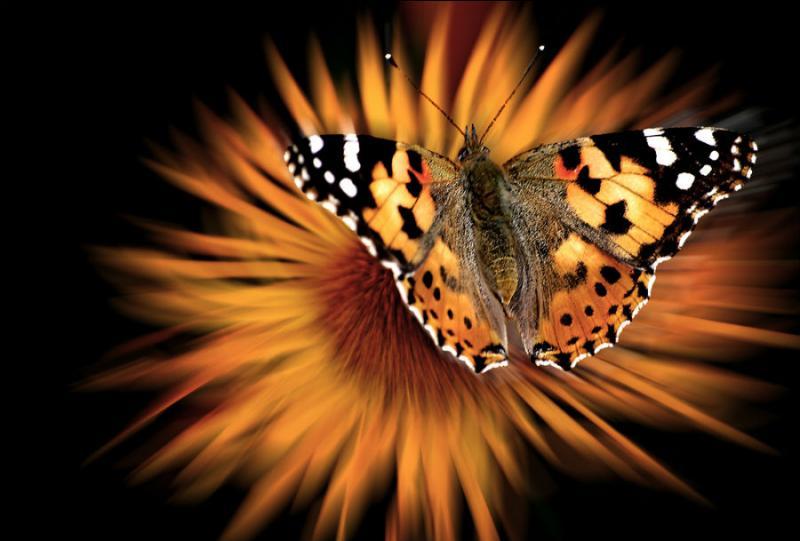 Ces animaux sont cités dans la chanson de Bénabar intitulée « L'effet papillon ».