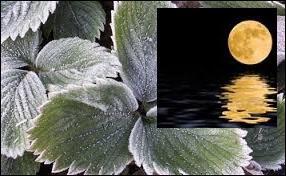 Dans quel cas la lune est-elle appelée « rousse » ?
