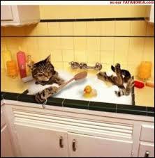Comment les chats se lavent-ils ?