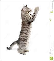 Comment se nomme un chat tigré ?
