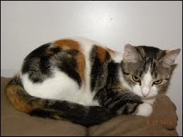 Comment appelle-t-on la femelle du chat ?