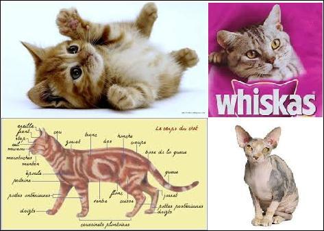 Qu'est-ce qu'un chaton ?