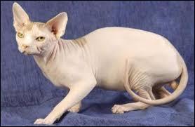 Comment se nomment les 3 catégories de poils de chats ?