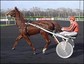 Cheval français utilisé en course de trot, monté et attelé, c'est le ...