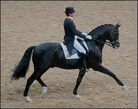 Cheval allemand assez grand taillé pour le CSO et le dressage, c'est ...