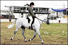 Combien existe-t-il de races de poneys ?