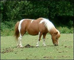 Combien y a-t-il de catégorie(s) de poneys ?
