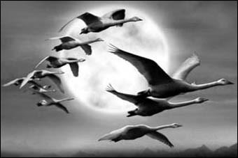 Ces oiseaux ont volé à 9 000 mètres d'altitude. C'est un record pour...