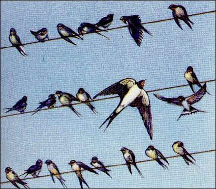 Cet oiseau quitte les sites de reproduction dès qu'il ne trouve plus de nourriture. C'est...