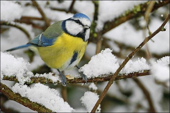 Tous les oiseaux migrent-ils ?