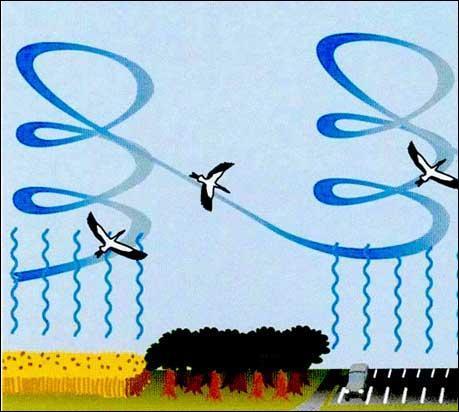 Vol battu ou vol à voile ? Lequel de ces deux modes de déplacement permet aux oiseaux de voler très haut dans le ciel (de 2 000 à 6 000 mètres) ?