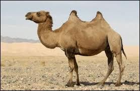 Emblème du koweit, quel est ce animal ?