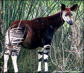 Quel animal est l'emblème du Congo ?