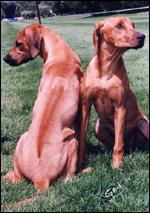 Quel est la race de ce chien ?